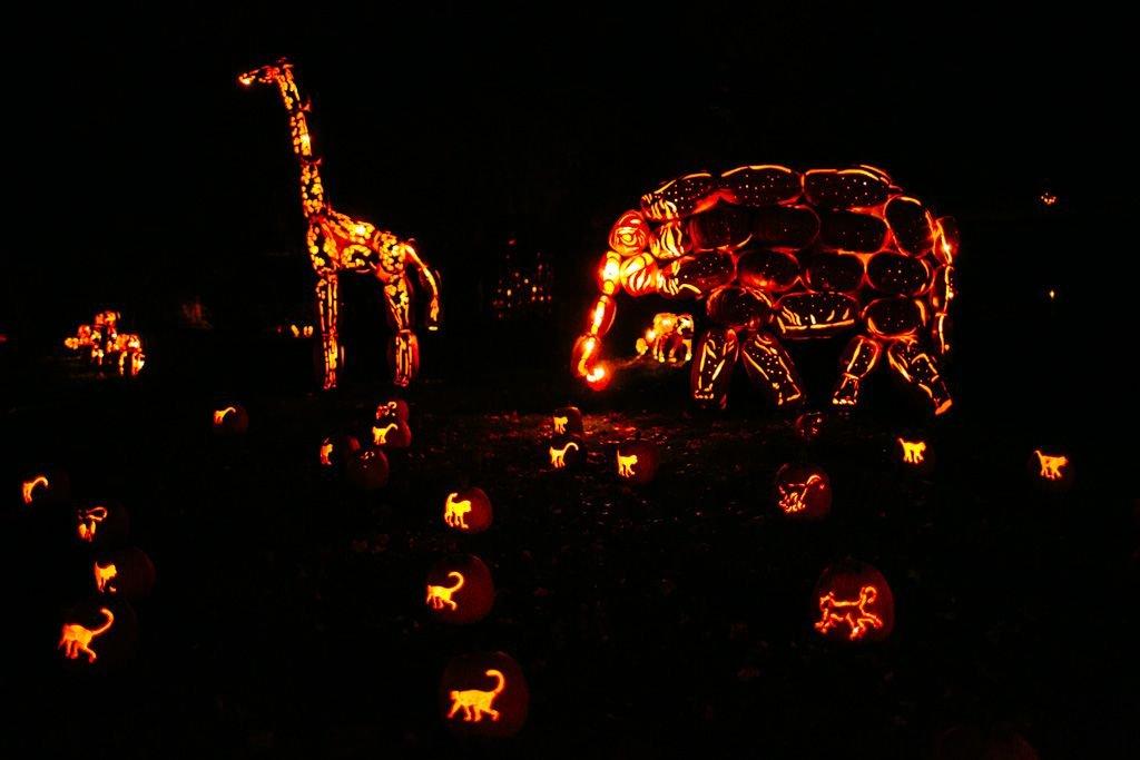 great jack-o-lantern blaze