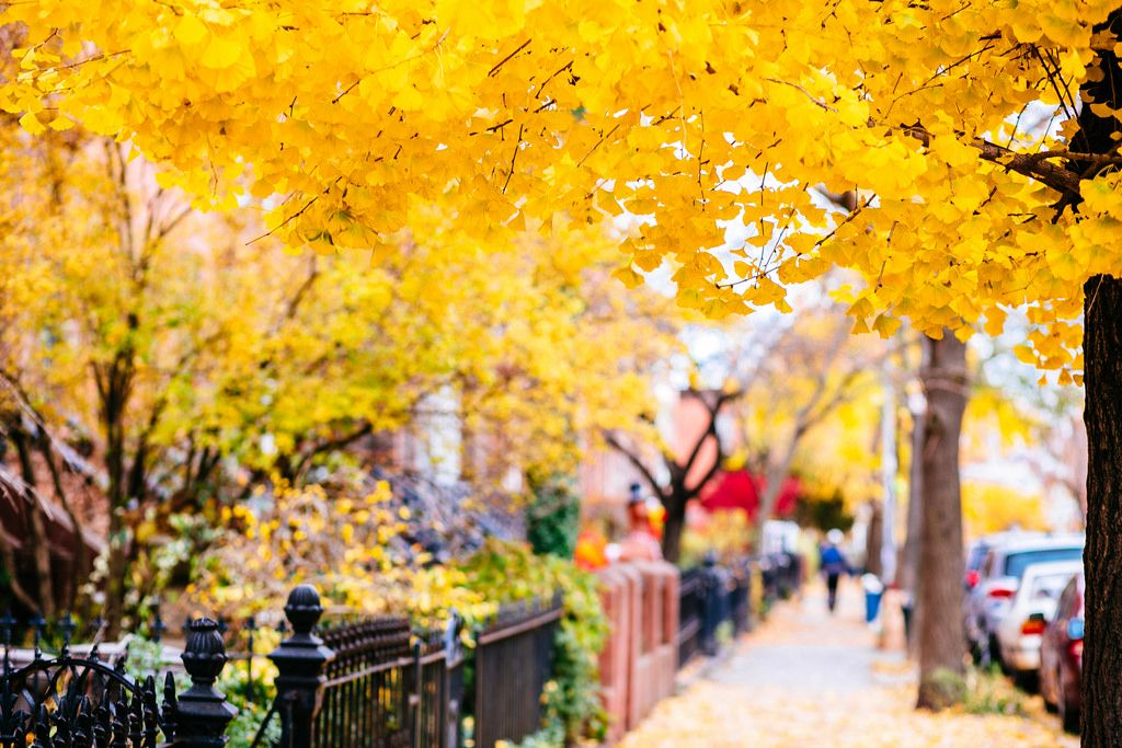 Cobble Hill fall foliage