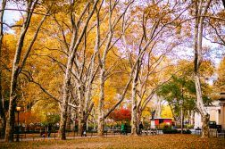 McGolrick Park fall foliage