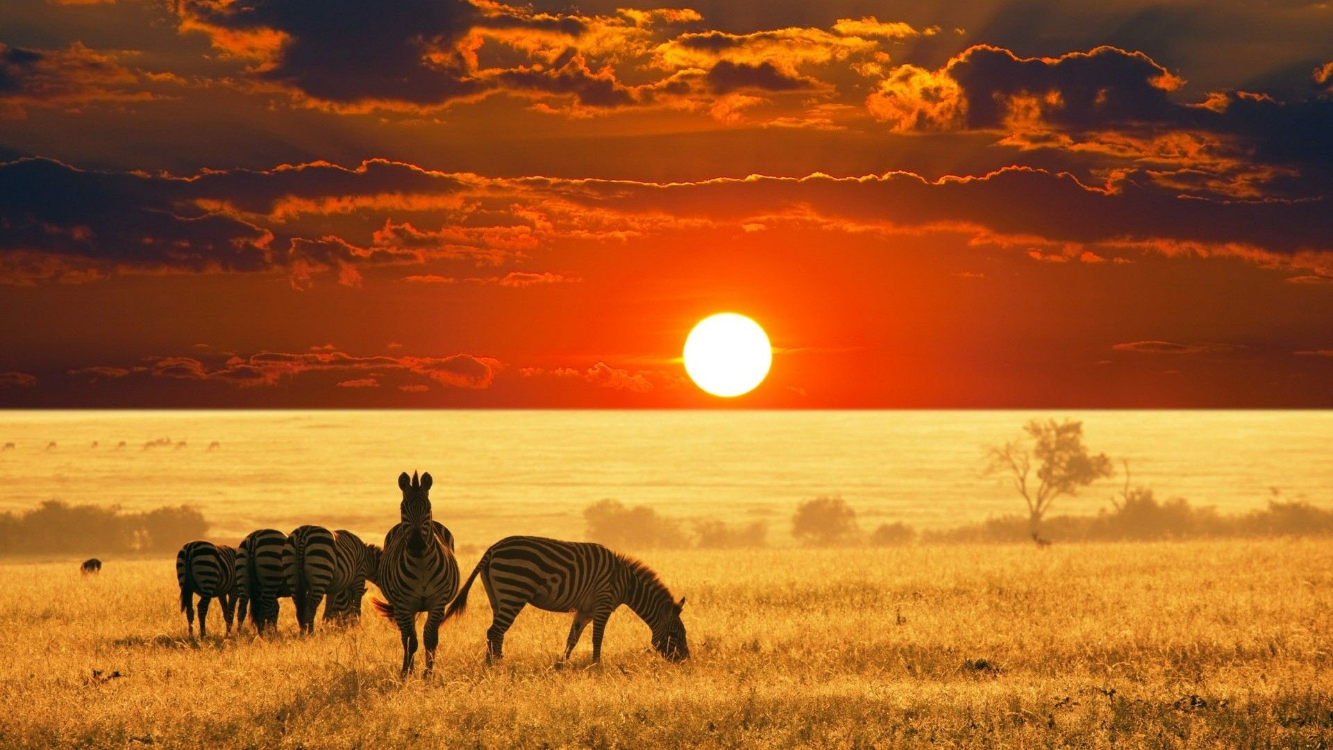 South African safari sunset