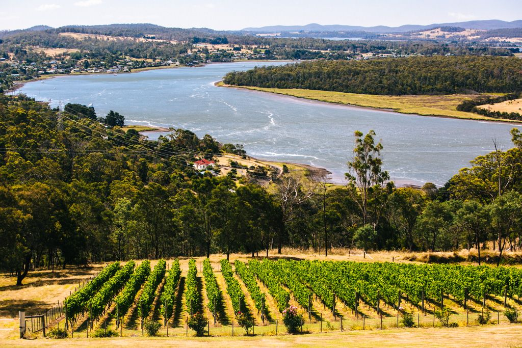 Tamar Valley wine tasting