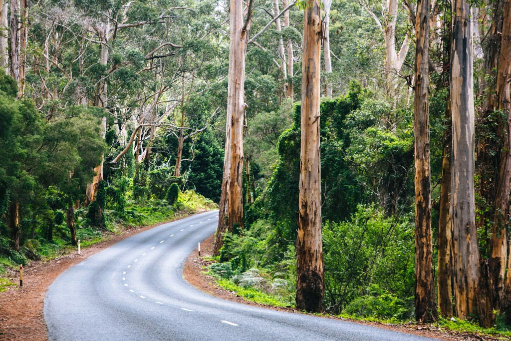 Margaret River forest