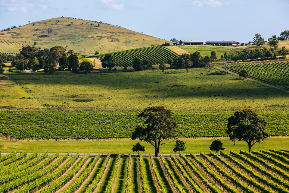 De Bertoli vineyard in Yarra Valley