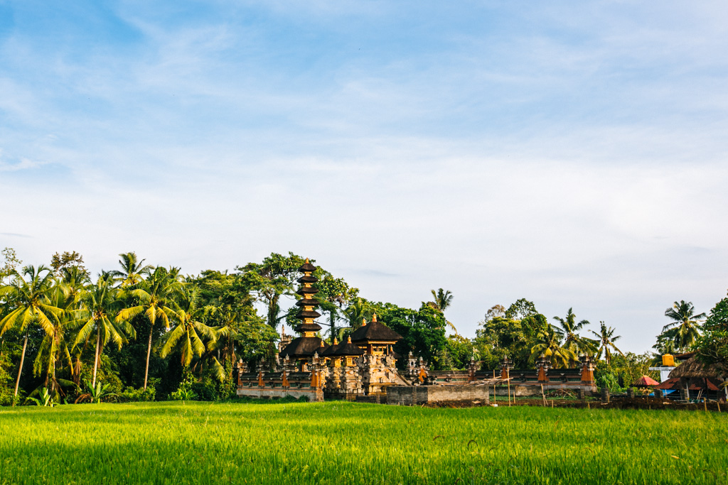 Ubud rice fields