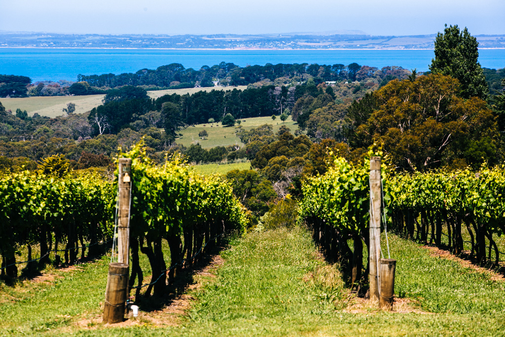 Mornington Peninsula vineyard