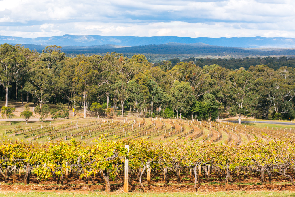hunter valley wine tasting