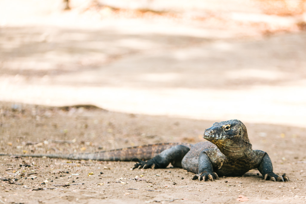The Ultimate Guide To Exploring Komodo National Park | Frugal Frolicker