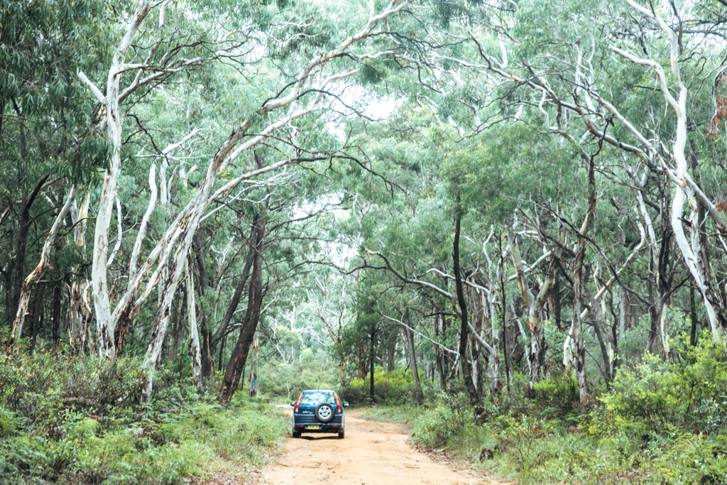 wollemi national park