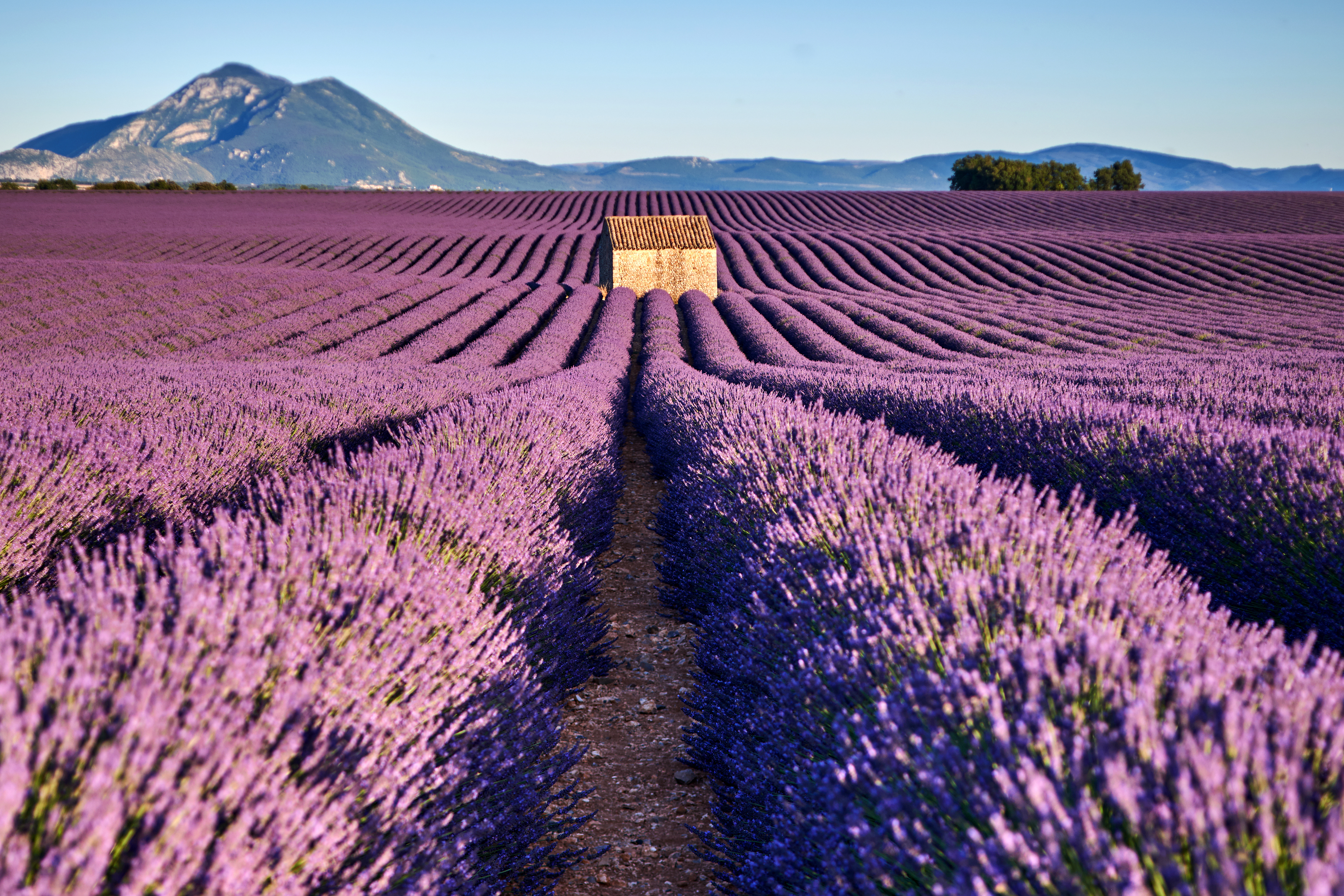 must see provence
