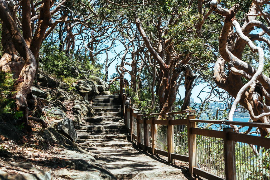 taronga to balmoral walk